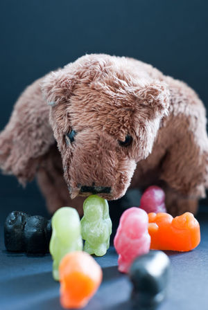 The Bear that eats Jelly Babies Bear Soft Toy Jelly Babies Sweets Confectionery Bear Eating Cuddly Toy Still Life Food Food And Drink Predator Brown Bear EyeEm Selects Toy Indoors  Childhood Candy Sweet Food No People Close-up