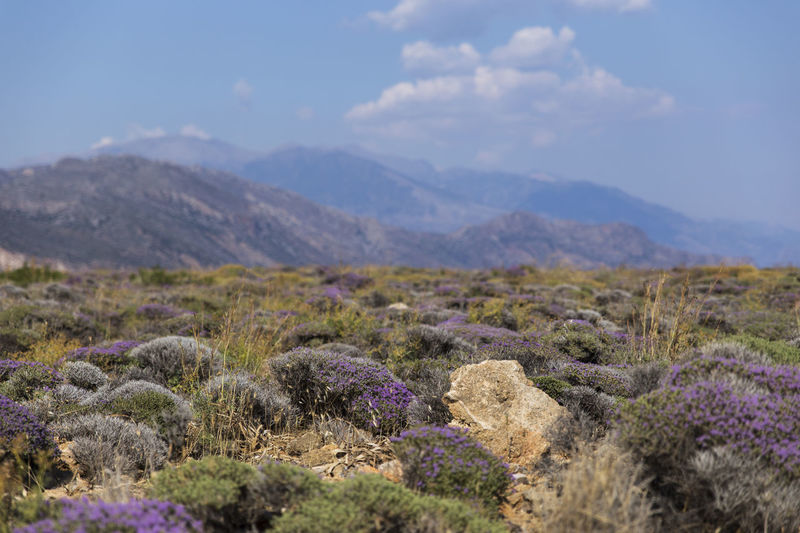 Crete Greece GREECE ♥♥ Perspectives On Nature Beauty In Nature Day Flower Landscape Mountain Mountain Range Nature No People Outdoors Plant Scenics Sky Tranquil Scene Vegetation Summer Exploratorium