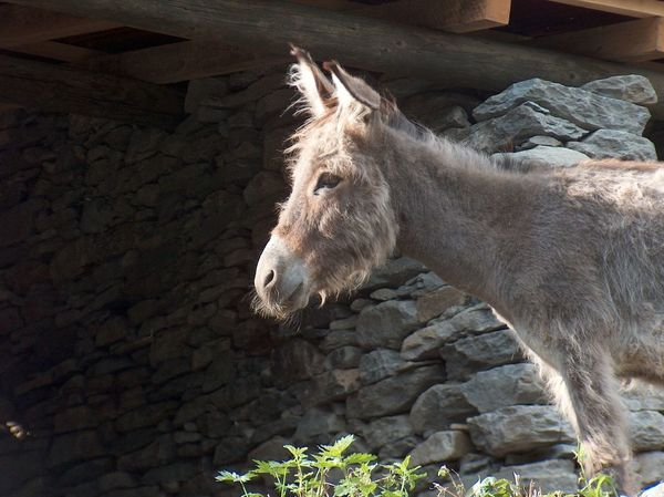 DonKey Donkey Scenics Light And Shadow Sky Mountains Nature Funny Stare Look Grey Strong Enduring Stubborn Sweet