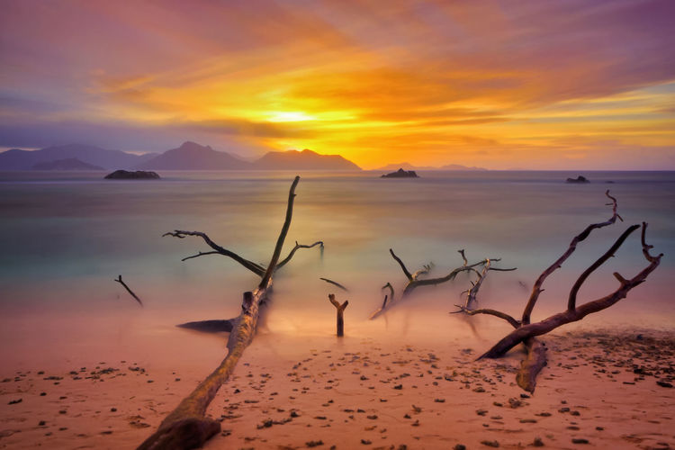 Scenic view of tree trunks at beach against sky during sunset