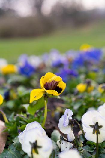 🌹☀️ Flowering