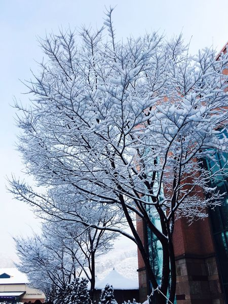 Tree Winter Taehee96 First Eyeem Photo