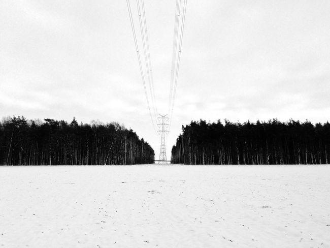 Winter Wintertime Wood Trees Highvoltage IPSWinter Landscape