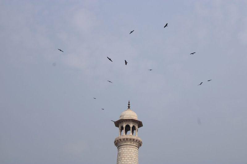Black Kites encircling minaret at Taj Mahal Bird Vertebrate Architecture Animal Animal Themes Animals In The Wild Built Structure Tower Flock Of Birds Travel Destinations