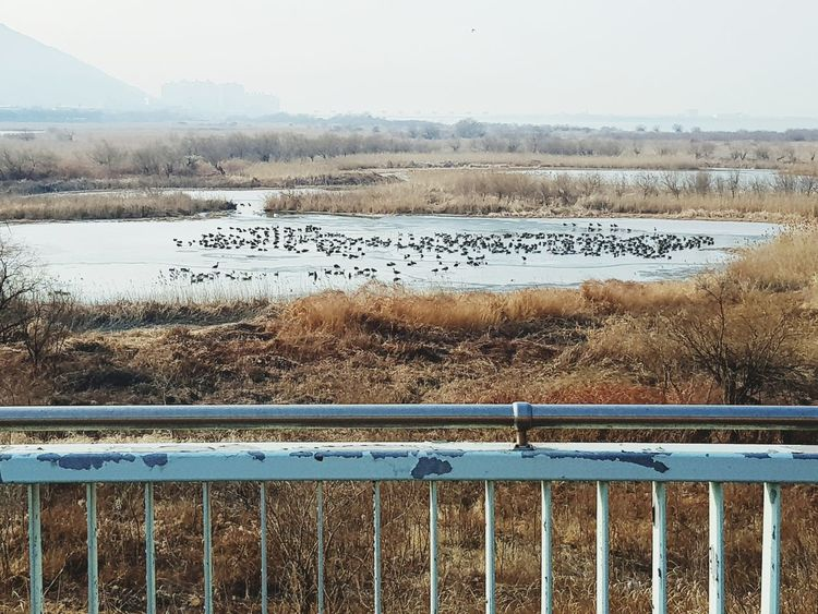 Bridge Animal Themes Animals In The Wild Large Group Of Animals No People Day Outdoors Bird Water Nature Sky Animal Wildlife