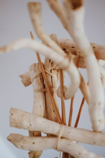Close-up of wood tied up against white background