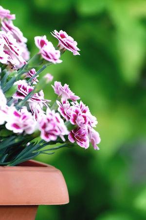 Botany Colours Of Nature Flower Photography Fragility Freshness Nature New Life Summer