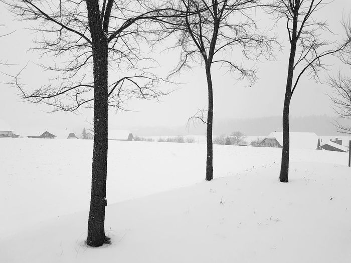 winter landscape Landscape Snow Tranquility Rural Scene Outdoors No People Day Tree Winter Cold Temperature Bare Tree Nature Beauty In Nature Tranquil Scene Cold Frozen Scenics Snowing