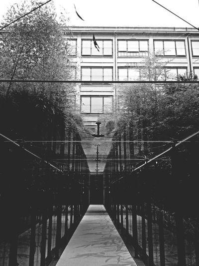 Grey garden for a grey day Taking Photos Turin Nhlingotto Architecture_bw