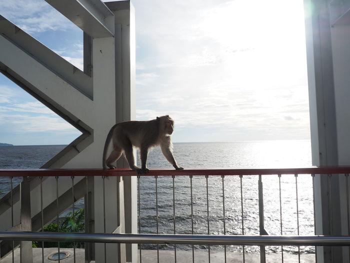 Dog looking at sea seen through window