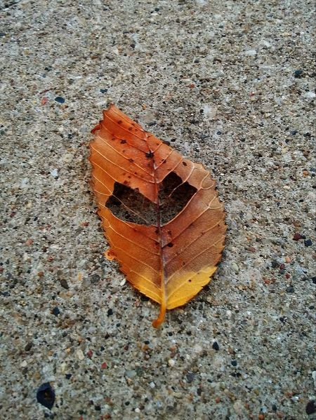Heart Shape Outdoors Leaf Love Nature Pretty♡ Check This Out Picturejunkie Beauty In Nature On The Path