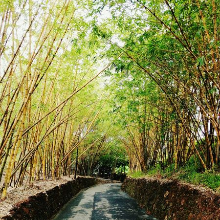 trying to learn to live life in lap of nature... Bamboo Trees Uphill Amusementpark Nature Photography Retrica 📷
