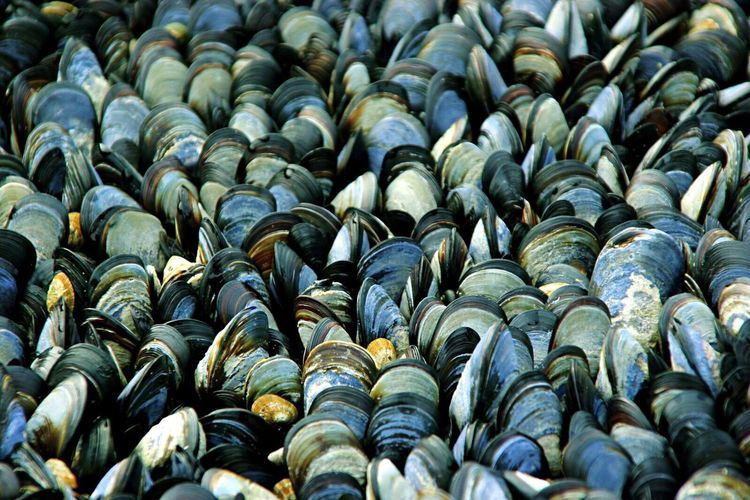 Full Frame Shot Of Mussels