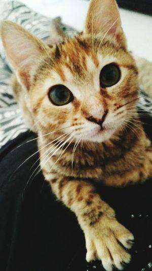 Crazy Cat Cat Kittycat Venere Me Love ♥ Details