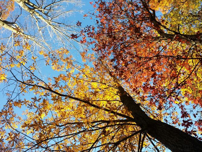 Autumn Leaves Autumn Colors Autumn Skies The Limit Blue Sky Colors Of The Sky Beautiful Sky Beautiful Day Skies Nature's Diversities The Great Outdoors - 2016 EyeEm Awards