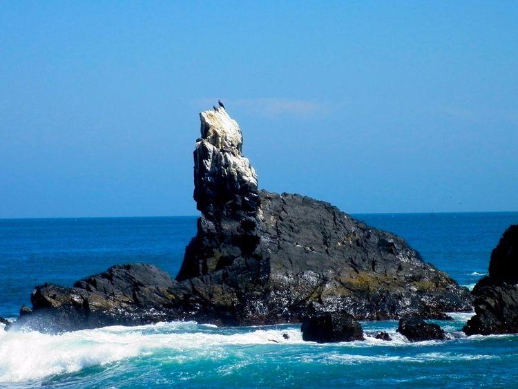 Peru Piura Bird Water Sea Nature Oseano Pacifico Zameos Travel Playa Sky