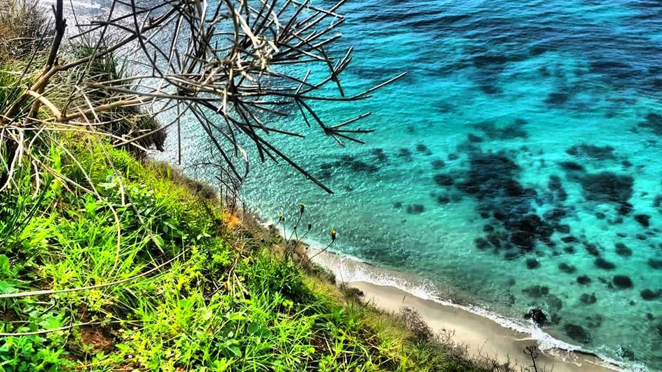 Tree Water Sea Beach Sand Branch High Angle View Sky Grass Horizon Over Water Turquoise Countryside Calm Ocean Clear Rippled Shallow Surface Palm Frond Peaceful Headland Lakeside Fishing Pole Marram Grass Pebble Beach Foreground Rushing Elevated View Shore Sandy Beach