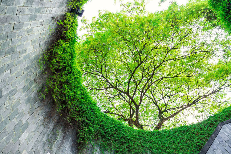 beautiful green nature of underground crossing in tunnel at Fort Canning Park, Singapore Circle Fort Canning Park Singapore Travel Underground Architecture Branch Brick Wall Environment Floral Forest Garden Growth Landmark Leaf Leaves Look Up Nature Outdoor Ozone Park Plant Tree Trunk Wall