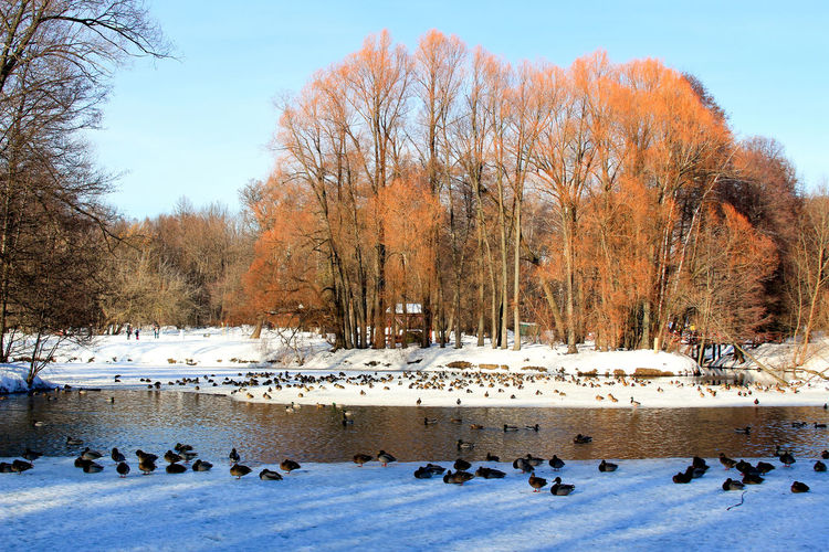 Colony Flock Of