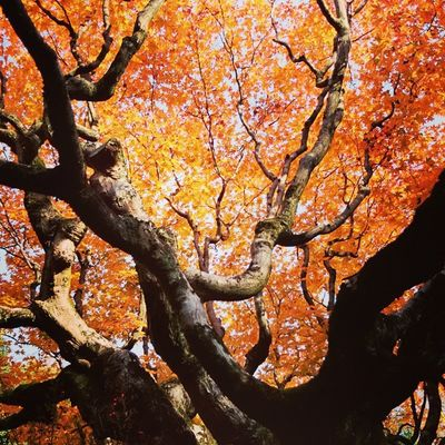 Kyoto Kotoin Daitoku -ji Temple Kyoto Nature Fall Colored Leaves