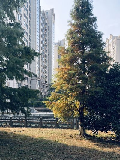 Trees and buildings in park during autumn
