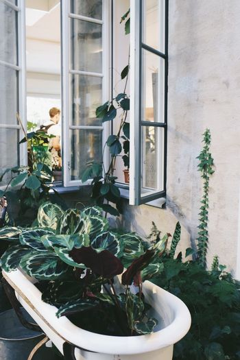 Green plants and open window Window Frame Window Potted Plant Potted Plants Plants Plants Interior Decorating Interior Style Interior Views Interior Design Interior Ideas Bathtub Plant Potted Plant Window Growth Architecture Door Built Structure Building Exterior Indoors  Day Close-up Flower Nature Greenhouse