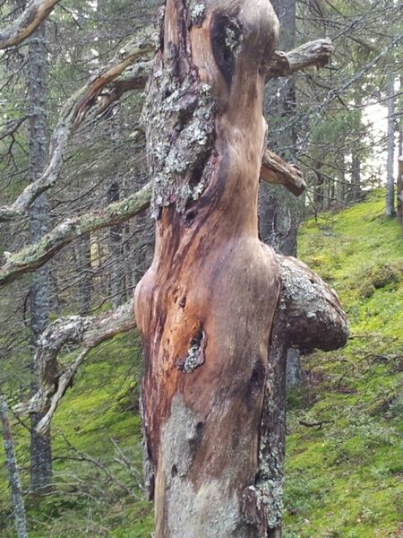 Highcoast Nature Sweden