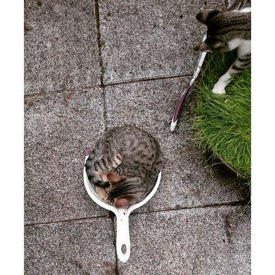 Ich hab tolle Hilfe beim Balkonputzen 😸 Rayado_the_cat Echo_the_cat