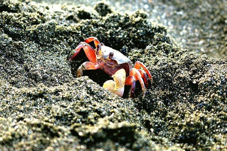 crablets Eyeem Fauna Fauna On The Seashore