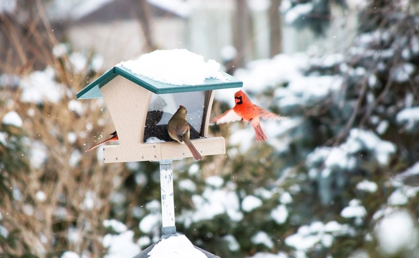 Close-up of birds frozen house during winter