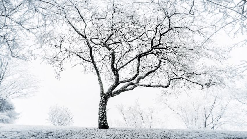Lone Winter Branch Beauty In Nature Bare Tree Outdoors No People Isolated Nature Snow Cold Temperature Tranquil Scene Disorder Nature Empty Places Ghostly Anorexia Suffering Reaching Reach 4 The Sky Reaching Out