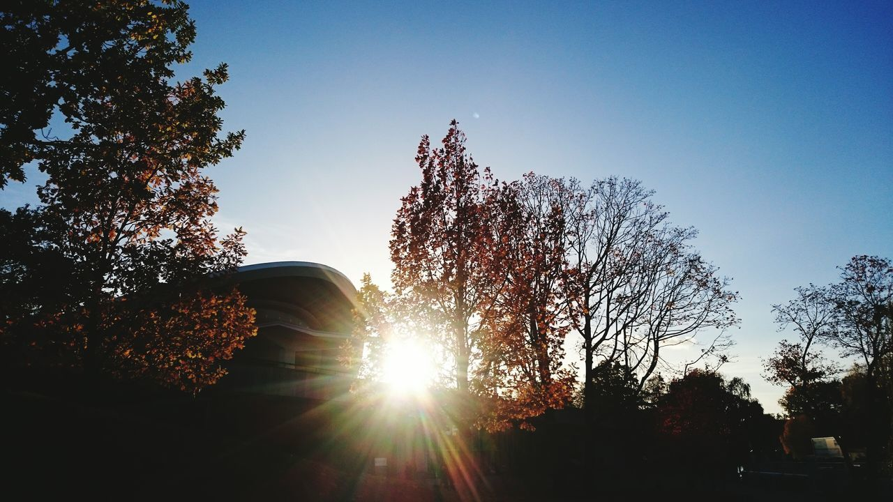 tree, sunlight, sun, lens flare, sunbeam, nature, growth, no people, tranquility, silhouette, beauty in nature, sky, sunset, outdoors, clear sky, low angle view, day, scenics