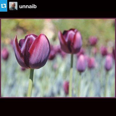 EyeEm Best Shots Nature Flowers Instafitit