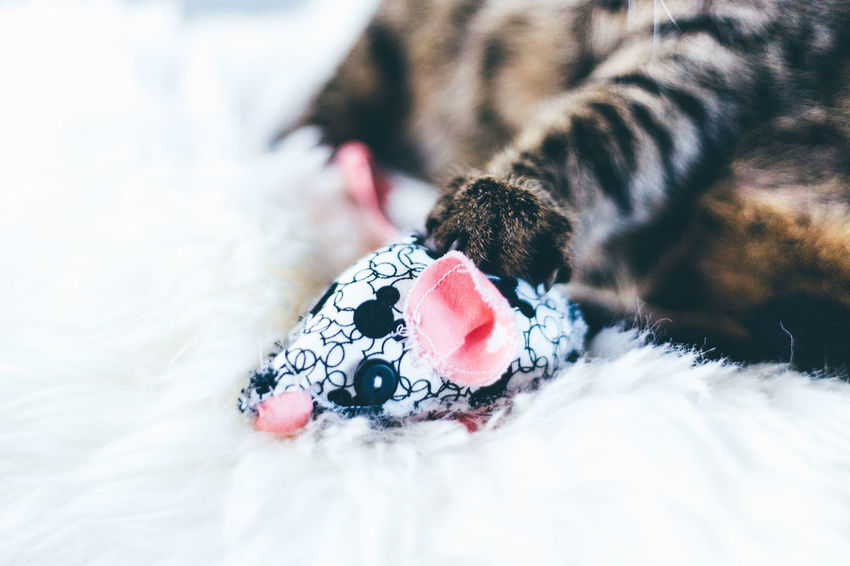 DIY Homemade Pet Portraits Playing With The Animals Animal Themes Cat Cat Toy Cat Toy Mouse Close-up Day Dog Domestic Animals Domestic Cat Feline Indoors  Low Section Mammal Mouse No People One Animal Pets Playing Cat Playing With A Cat Sewed Toy Mouse