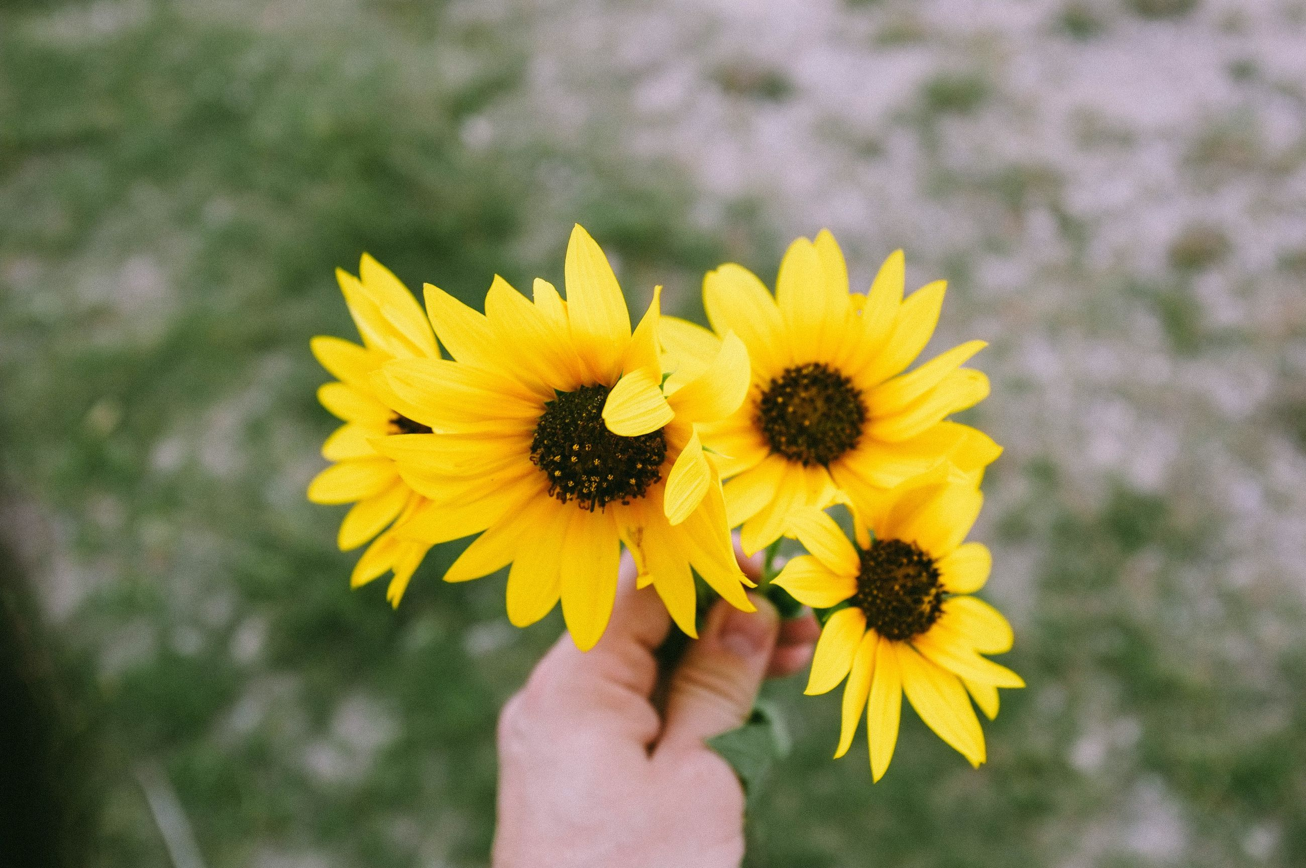 yellow, flower, flowering plant, human hand, vulnerability, fragility, freshness, human body part, hand, flower head, one person, plant, petal, inflorescence, holding, finger, real people, human finger, focus on foreground, close-up, body part, pollen, outdoors, human limb