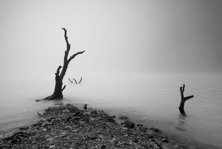 Logs in lake during foggy weather