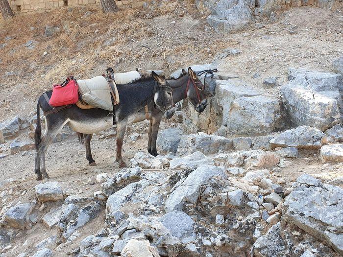 Donkeys....havin