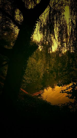 Darkness DarknessIntoLight Lakeside Trees Water Reflections Shadows & Lights Ruralscenes Darkness Into Light Fineart Peace And Quiet Nature EyeEm Best Shots Water_collection Naturelovers Beauty In Nature Through My Lens Evening Sky