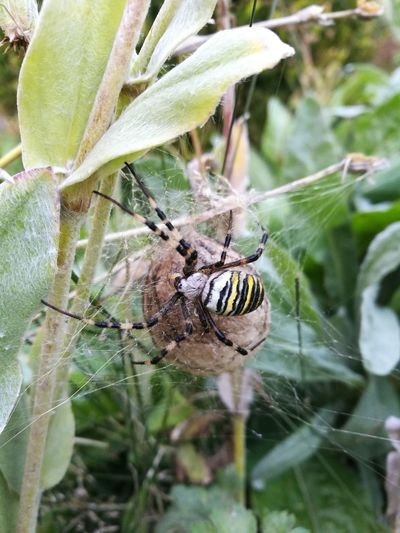 Spider One Animal Spider Web Animal Themes Animals In The Wild Insect Nature Animal Wildlife Wespenspinne Nest Spinnennest