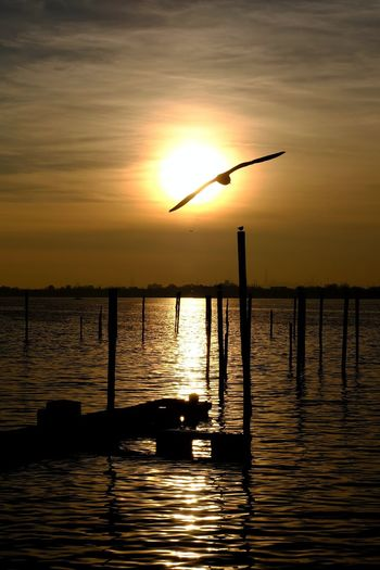 Flying to greet the moon. Sunset Scenics Water Sun Orange Color Tranquil Scene Tranquility Beauty In Nature Waterfront Rippled Silhouette Reflection Nature Wooden Post Vibrant Color Dramatic Sky Photography 📷=🖌🎨