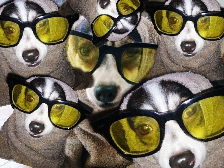 Lol :) Dog Dog❤ Dogs 🐶🐶🐶🐶🐶🐶☀😁 Dogs Of EyeEm 🐶🐺ilovemydogs ❤ 🐕 🐦 🌳 ☺