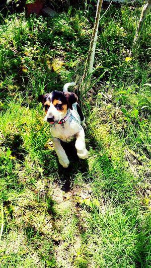 Puppy My Little Puppy Cute Puppy Hernameissansa