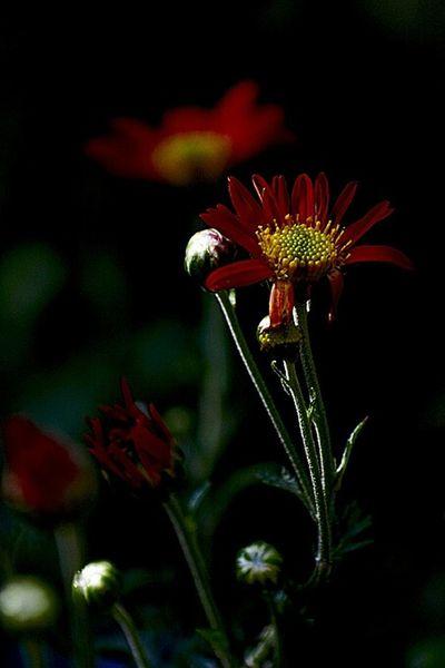 Flowers RAD Sunflower