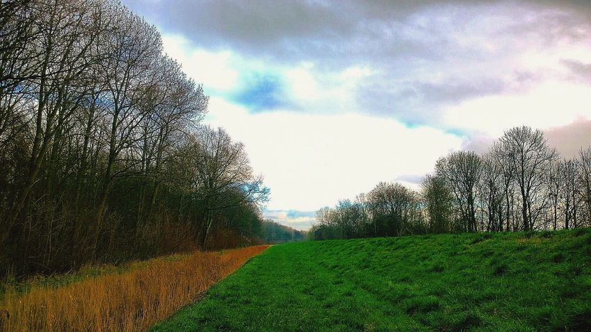 Dike Dutch Landscape Landscape_photography Scenery Trees Clouds And Sky Love Nature Naturelover Walkabout