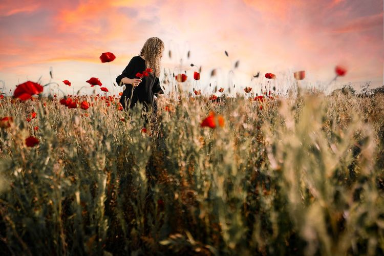 Young woman picking flowers. close-up of poppies on field against sky during sunset
