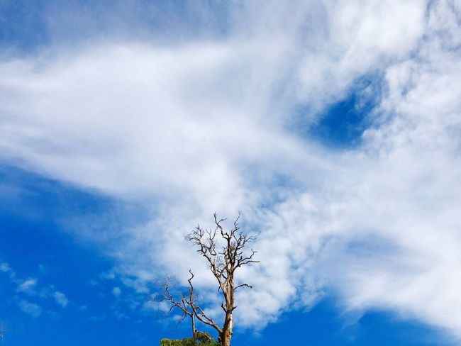 EyeEm Selects Sky Cloud - Sky Low Angle View Blue Nature Branch Beauty In Nature Tranquility Outdoors Bare Tree The Week On EyeEm