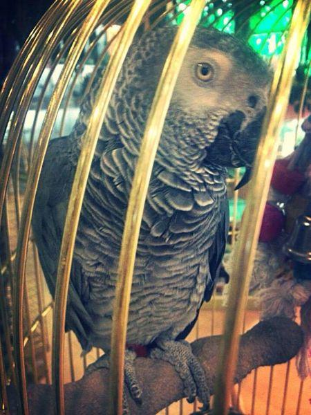 Birds Zoo Parrot Parrots Jako Parrot Nature_collection EyeEm Nature Lover Nature