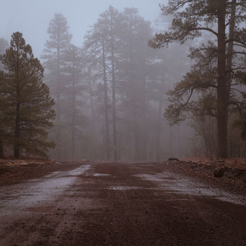 Dirt road amidst trees in forest during winter