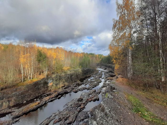 Scenic view of stream in forest against sky