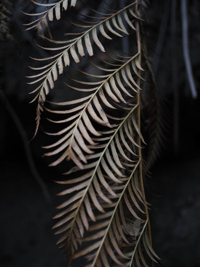 Closeup of beautiful dry leaves in the rain forest of blue mountain, australia.